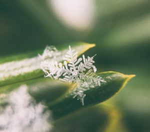 Crystal on a leaf